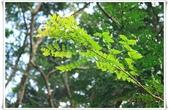 福山植物園:IMG_1536.JPG