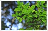 福山植物園:IMG_1465.JPG