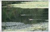 福山植物園:IMG_1287.JPG