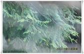 福山植物園:IMG_1428.JPG