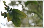 福山植物園:IMG_1474.JPG
