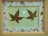 壓花作品區:南庄的楓香