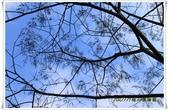福山植物園:IMG_1520.JPG