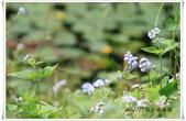 福山植物園:IMG_1297.JPG