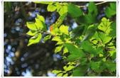 福山植物園:IMG_1460.JPG