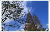 福山植物園:IMG_1308.JPG