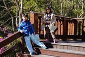 2015.01.24奧萬大森林公園:DSC00332_調整大小.JPG