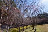 2015.01.24奧萬大森林公園:DSC00344_調整大小.JPG