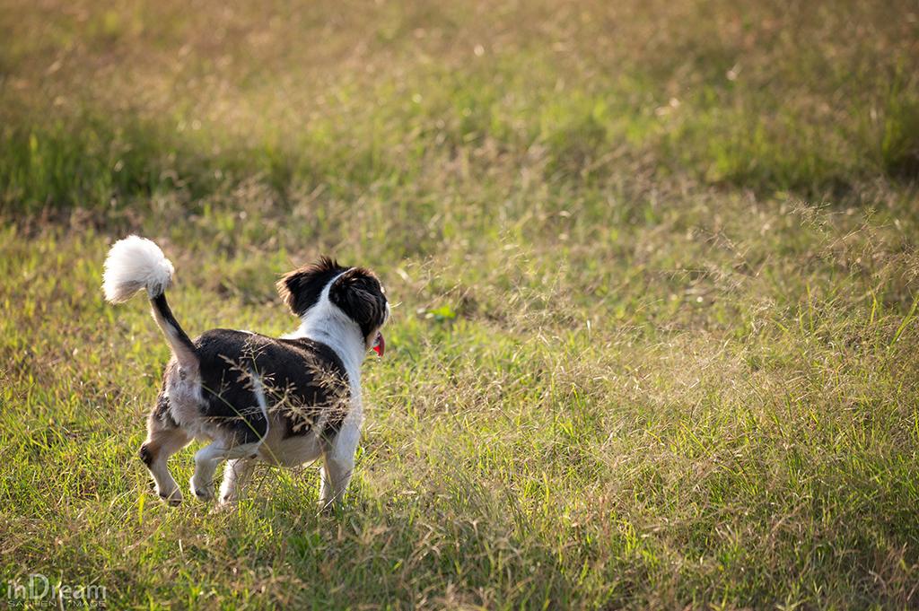 寵物寫真,寵物攝影,狗狗寫真,狗狗攝影,貓貓真,貓貓攝影,毛小孩攝影,毛小孩拍照,新竹寵物拍照,新竹寵物寫真,台北寵物拍照,台北寵物寫真