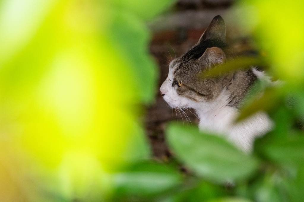 """""""寵物寫真,寵物攝影,狗狗寫真,狗狗攝影,貓貓真,貓貓攝影,毛小孩攝影,毛小孩拍照,新竹寵物拍照,新竹寵物寫真,台北寵物拍照,台北寵物寫真"""""""