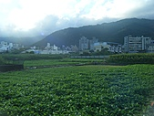 2010.09.08宜蘭礁溪:空心菜園2.JPG