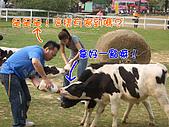 綜藝大集合嘉義中埔:嘉義中埔_12喝奶奶之餵牛二.jpg