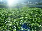 2010.09.08宜蘭礁溪:空心菜園.JPG