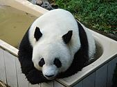 熊貓:01熊貓.JPG