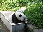 熊貓:02.JPG