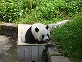 熊貓:03.JPG