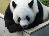 熊貓:04.JPG
