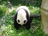 熊貓:05.JPG