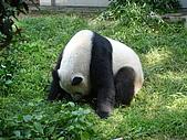 熊貓:06.JPG
