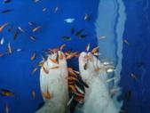 小慧:礁溪小魚