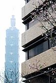 台北地區:DSC_3439CK.jpg