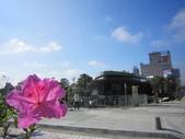 2013-1-6東海藝術街及秋紅谷:IMG_7596.JPG