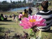 2013-1-6東海藝術街及秋紅谷:IMG_7644.JPG
