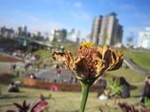 2013-1-6東海藝術街及秋紅谷:IMG_7647.JPG