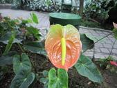 2012/2/7科博館茶花展及台中燈會一日遊:IMG_0008.JPG