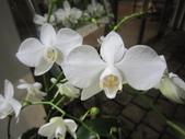 2012/2/7科博館茶花展及台中燈會一日遊:IMG_0013.JPG