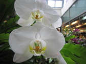 2012/2/7科博館茶花展及台中燈會一日遊:IMG_0014.JPG