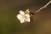 冬之花:DSC06810.JPG