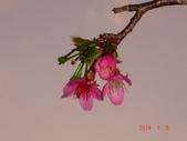冬之花:DSC06158.JPG