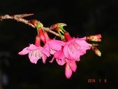 冬之花:DSC06160.JPG