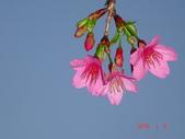 冬之花:DSC06162.JPG