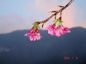 冬之花:DSC06165.JPG