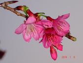 冬之花:DSC06166.JPG