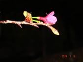 冬之花:DSC06170.JPG