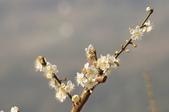 冬之花:DSC06811.JPG