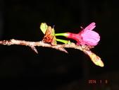 冬之花:DSC06171.JPG
