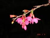 冬之花:DSC06172.JPG