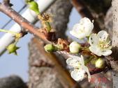 冬之花:DSC06151.JPG