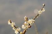 冬之花:DSC06812.JPG