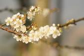 冬之花:DSC06813.JPG
