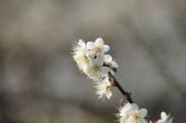 冬之花:DSC06804.JPG