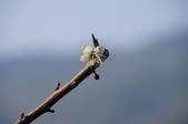冬之花:DSC06805.JPG