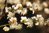 冬之花:DSC06815.JPG