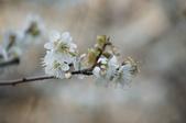 冬之花:DSC06806.JPG