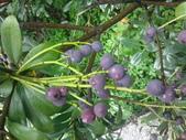 水果總彙:IMG_20130901_105822.jpg