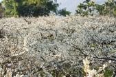 冬之花:DSC06807.JPG